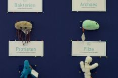The world of microorganisms